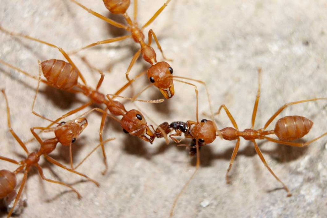 Send Those Pests Packing in New Braunfels, Texas and surrounding areas