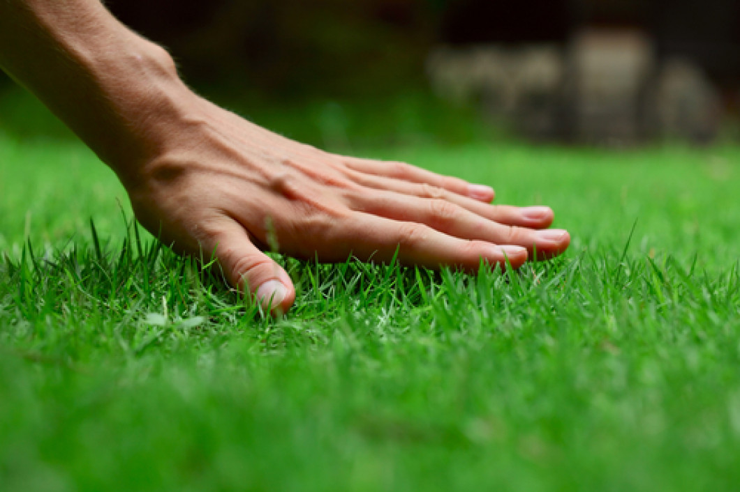 Get a Weed-Free Lawn in No Time